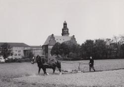 Blick auf das Rathaus Reinickendorf vom Nutzfeld der ehemaligen Karl-Bonhoeffer-Nervenklink am Eichborndamm, 1962, unbekannter Fotograf © Archiv Museum Reinickendorf